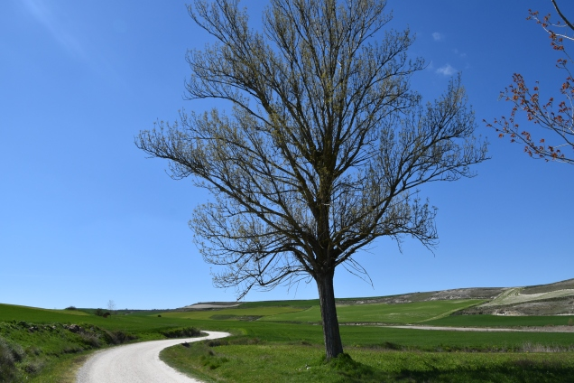 Na poti me je pogled na čudovito naravo osrečil